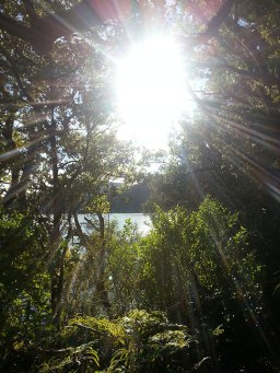light thru the trees rotopaumanu