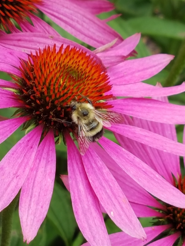"""""""Bee here now"""" taken by wise owl lucky"""
