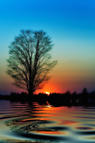 sunset w tree and swirlihg water lovely