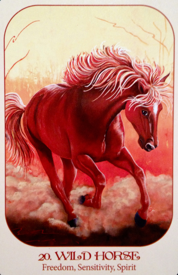 Wild Horse, from the Animal Voices Oracle Card deck, by Chip Richards