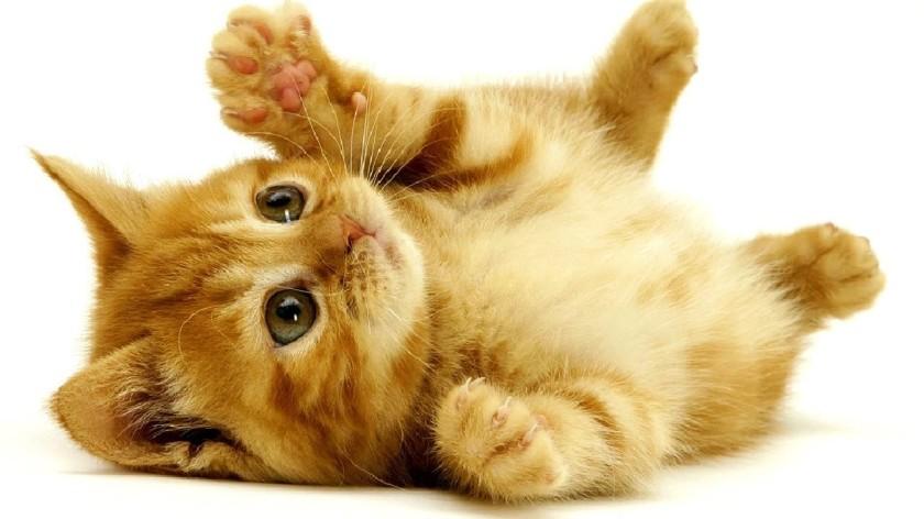 süße katzen bilder zum ausdrucken