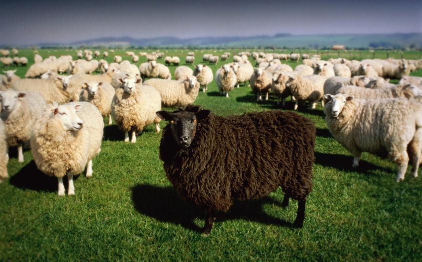 https://dreamweaver333.files.wordpress.com/2018/12/black-sheep-consciousness-closet-awake-1.jpg