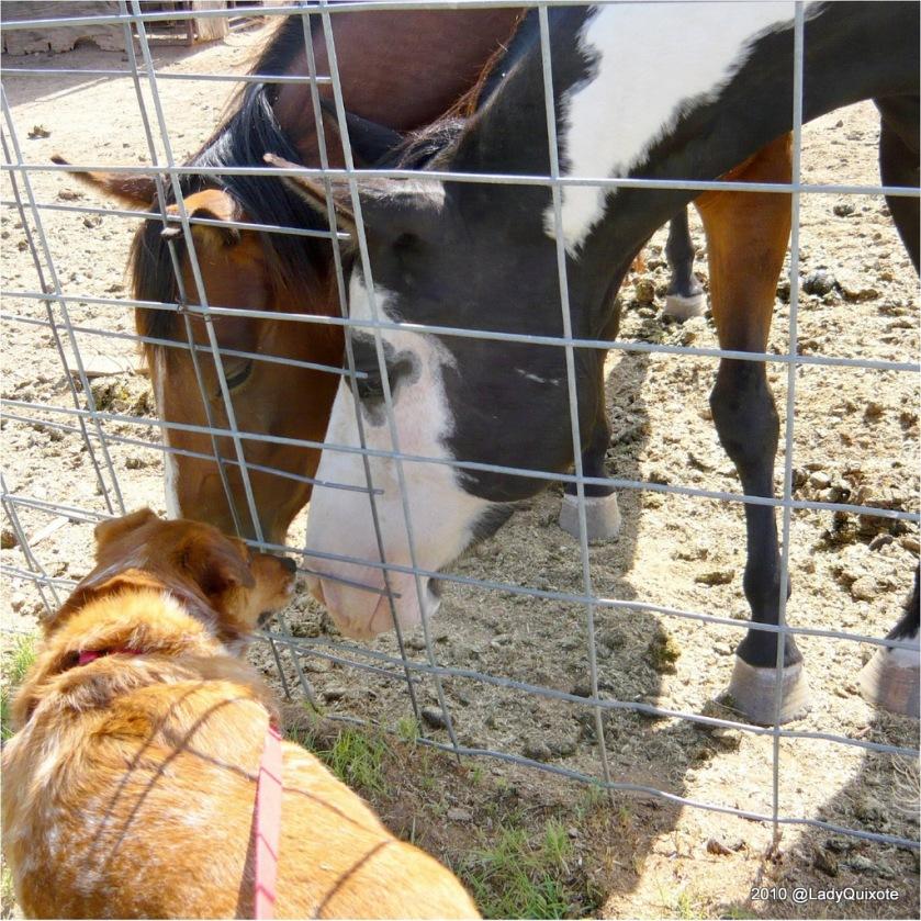 Lady+Horses-1024