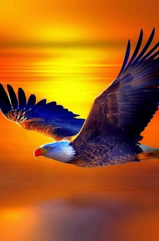 """""""Hineinziehenlassen"""" oder die Adlerpositioneinnehmen?"""