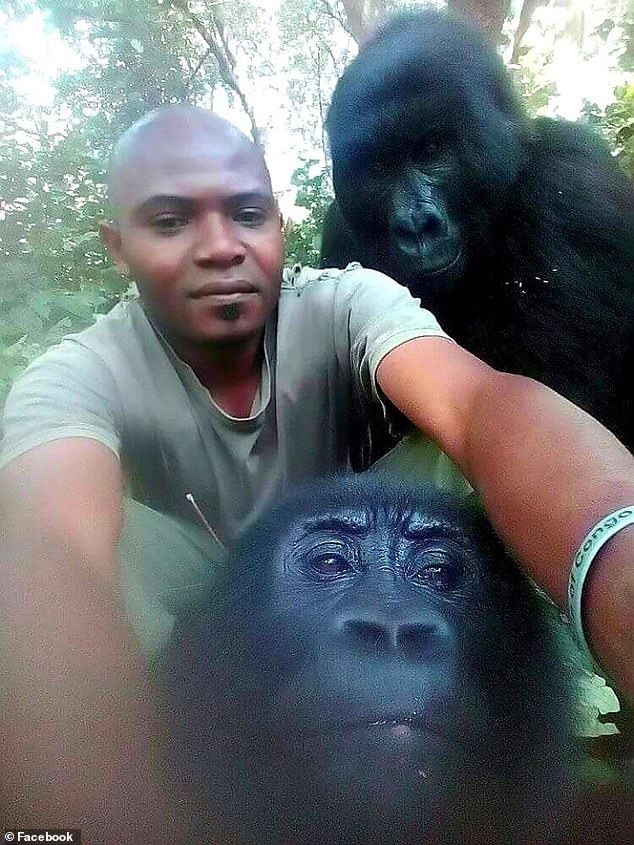 Me and my pri-mates! Anti-poaching ranger's extraordinary selfies with two gorillas in Congo national park