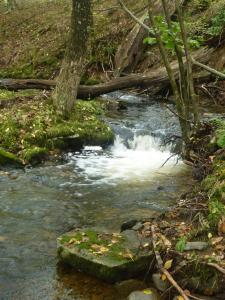 A healthy stream
