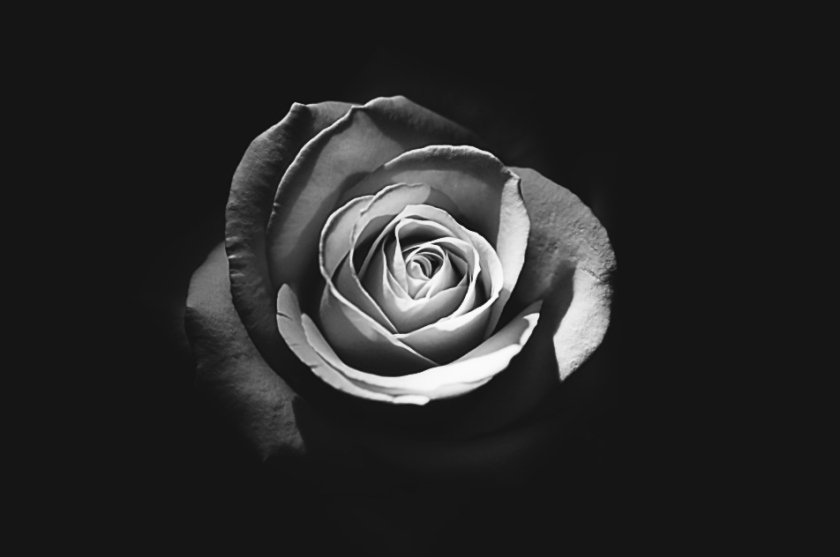 BW_Rose