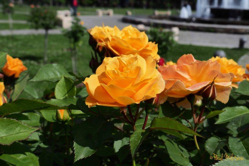 orange - divine love