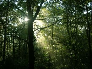 Sacred rays of the sun