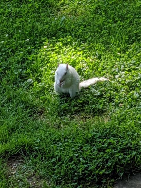 PHOTOGRAPH TAKEN BY WISE OWL KAROL