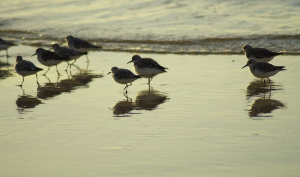 birds-4163844_1920
